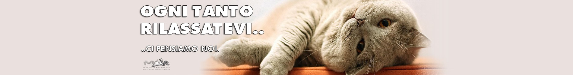 Slide_gatto_250